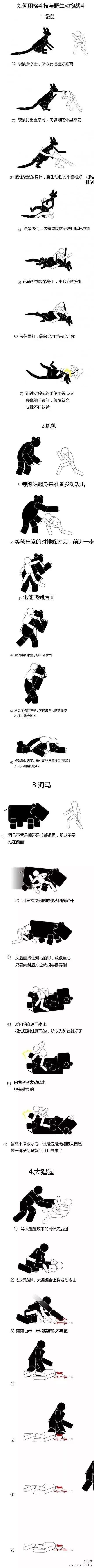 如何用格斗技与野生动物战斗