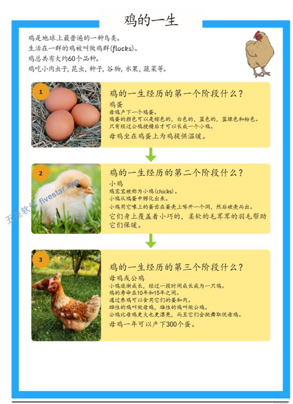 Twinkl-小学高年级-科学-鸡的一生阅读理解